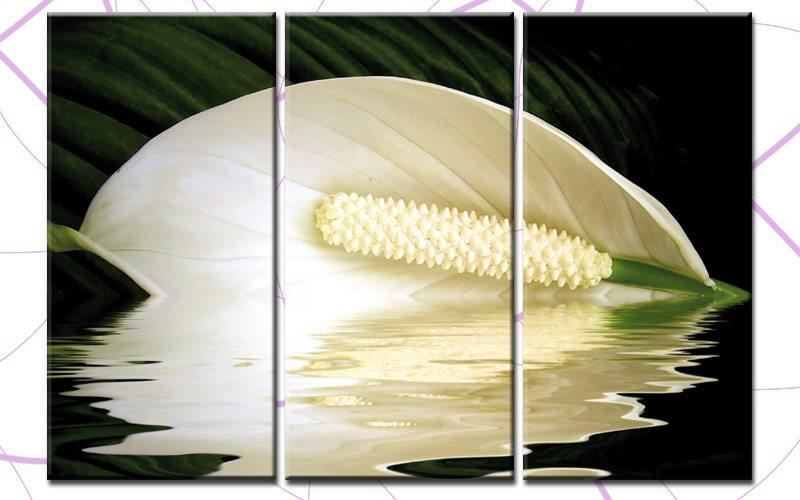 white calla leinwand 3 bilder blume lilie c00161 die leinwandfabrik. Black Bedroom Furniture Sets. Home Design Ideas
