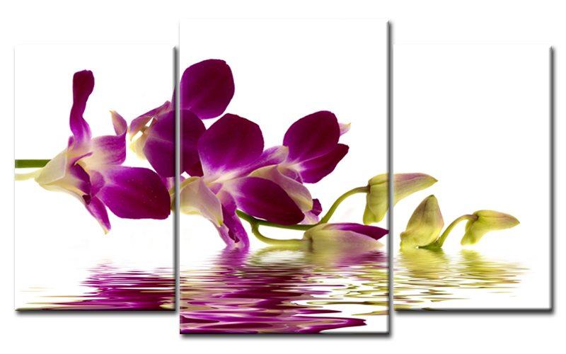 orchidee zauber leinwand 3 bilder lila m30459 die leinwandfabrik. Black Bedroom Furniture Sets. Home Design Ideas