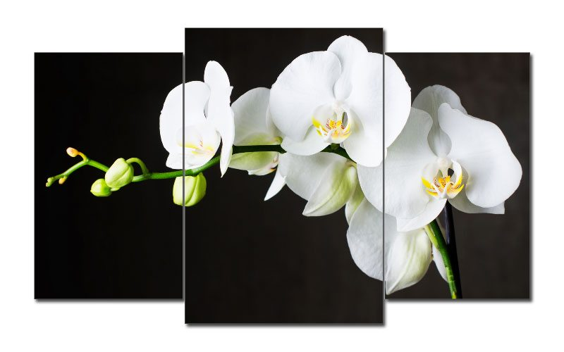 flower leinwand 3 bilder white orchidee m31221 die leinwandfabrik. Black Bedroom Furniture Sets. Home Design Ideas