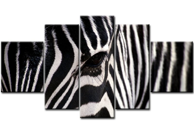 zebra safari 5 bilder leinwand afrika m50404 die leinwandfabrik. Black Bedroom Furniture Sets. Home Design Ideas