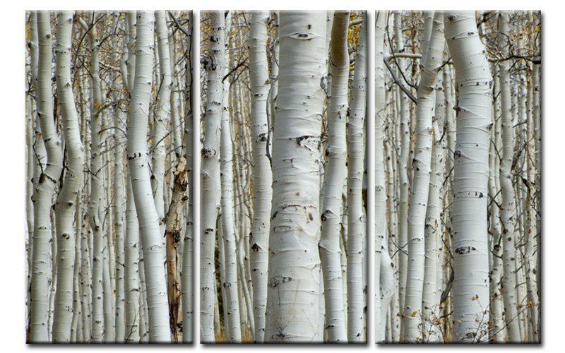 birkenwald leinwand 3 bilder wei e birken forest c00886. Black Bedroom Furniture Sets. Home Design Ideas