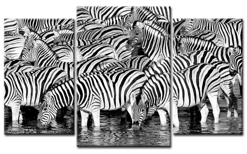 zebra herde leinwand 3 bilder animal mxl30691 die leinwandfabrik. Black Bedroom Furniture Sets. Home Design Ideas