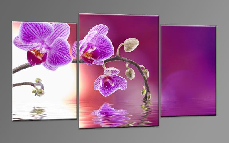 Bilder Acryl Mehrteilig : WATER ORCHIDEE Leinwand 3 BILDER M32604  Die Leinwandfabrik