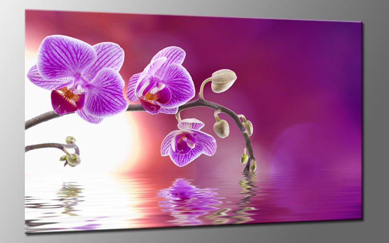 orchidee art leinwand bild auf keilrahmen a01639 die leinwandfabrik. Black Bedroom Furniture Sets. Home Design Ideas