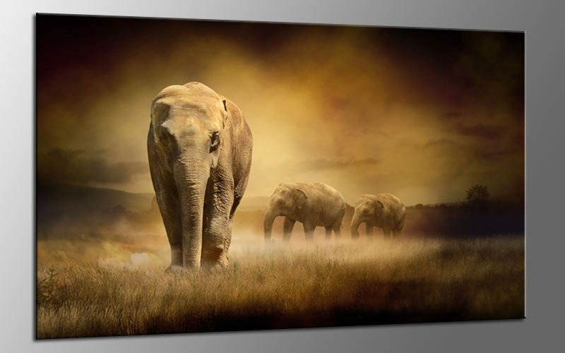 golden elephants leinwand bild auf keilrahmen a01652 die. Black Bedroom Furniture Sets. Home Design Ideas