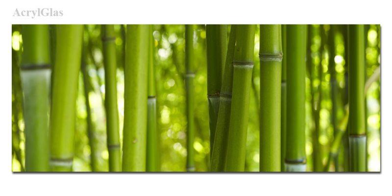 dekor echtglas ag312500273 bild bambus wald asien 125x50cm die leinwandfabrik. Black Bedroom Furniture Sets. Home Design Ideas