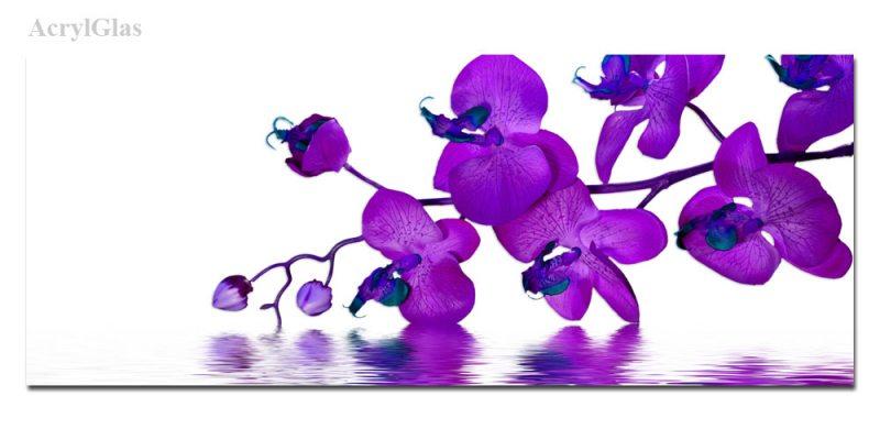 www erotik de die blГјhende orchidee