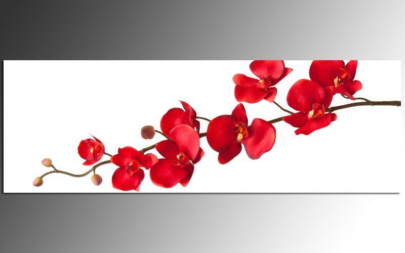 acryl dekoglas ag39000690 wandbild pretty orchidee rot. Black Bedroom Furniture Sets. Home Design Ideas